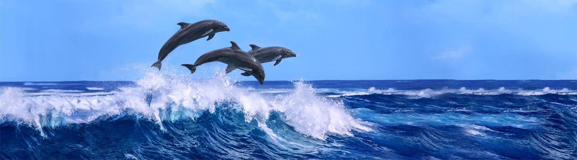 Dolphins - DynamicGroupSync